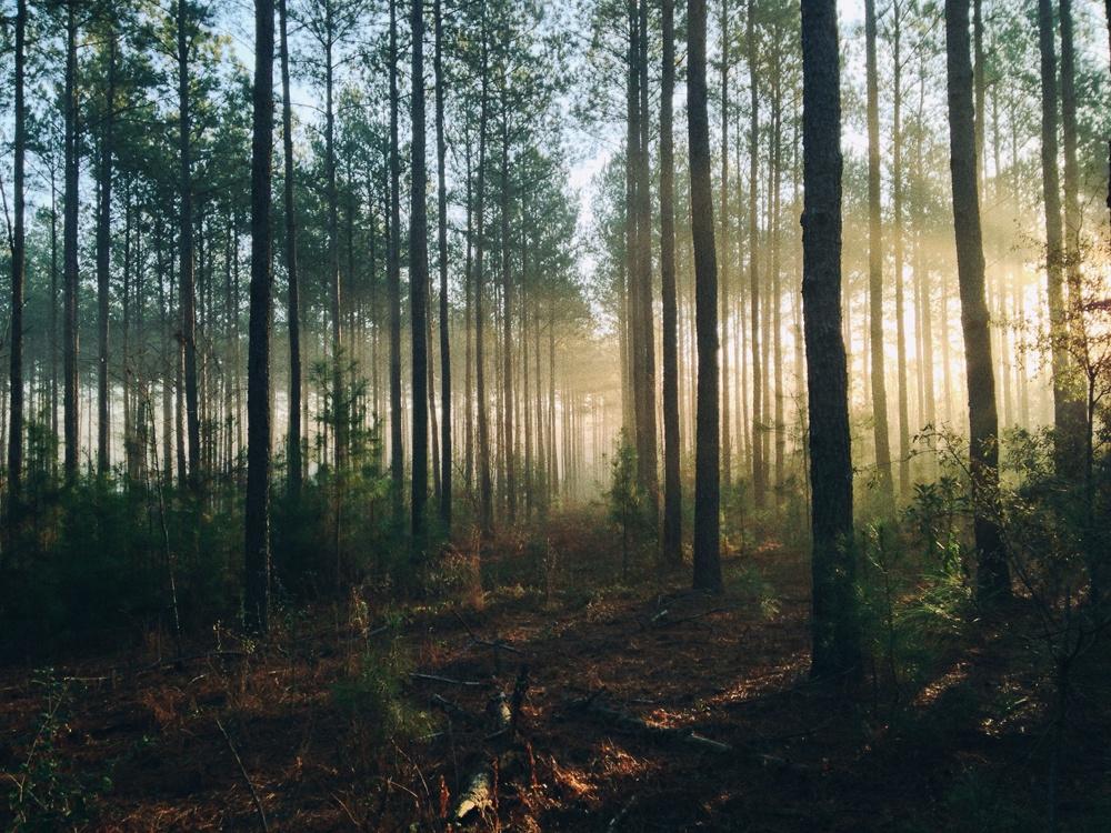 Sonnenschein durch den Wald
