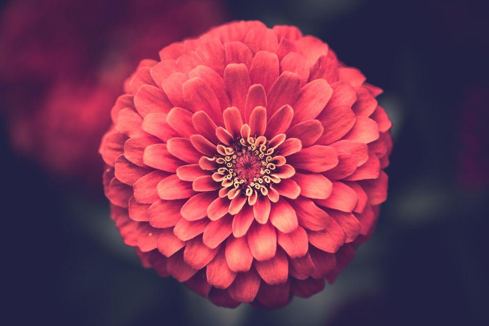 perfekte Blume