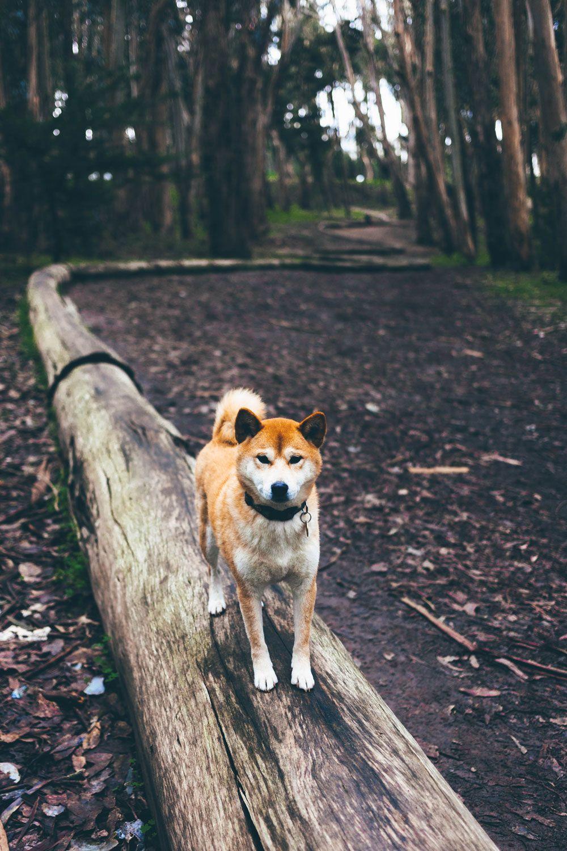 Hund auf Baumstamm