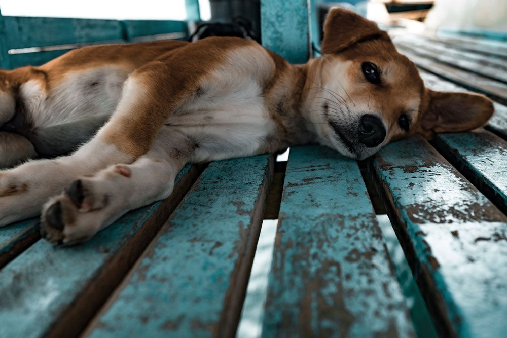 Hund Chilld