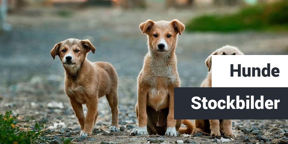 Hunde Stockbilder Teaser